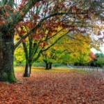 fall_autumn_trees_215050